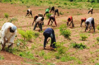 local crop